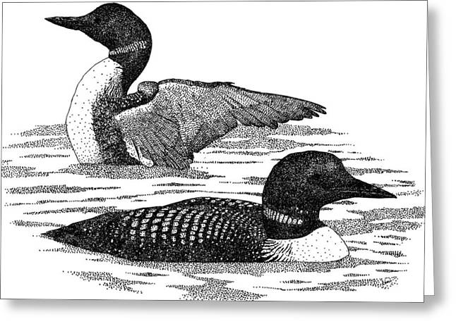 Common Loons Greeting Card