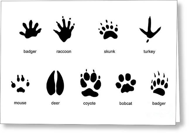 Common Mammal Animal Tracks Greeting Card