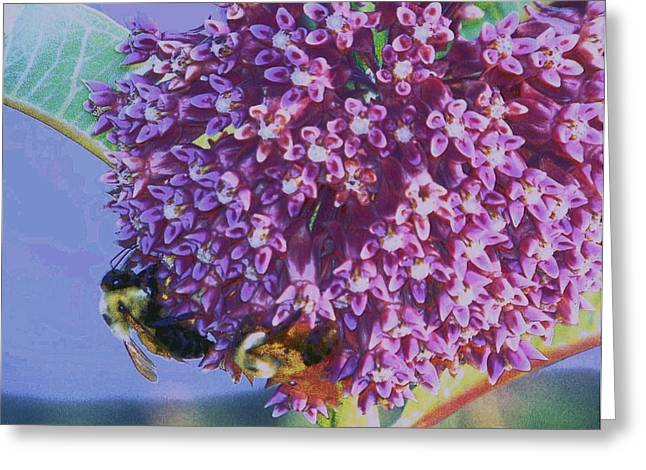 Common Milkweed Greeting Card by Shirley Moravec