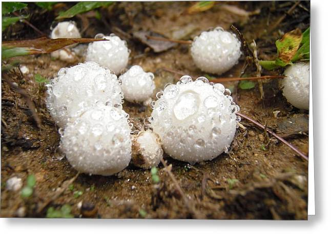 Common Puffball Dewdrop Harvest Greeting Card