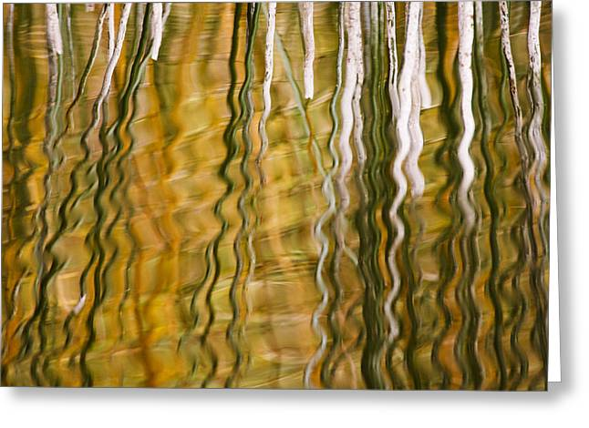 Common Reed Reflecting In Water Greeting Card by Heike Odermatt