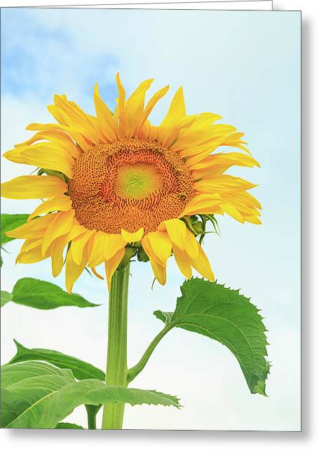 Community Garden, Moses Lake Greeting Card by Stuart Westmorland