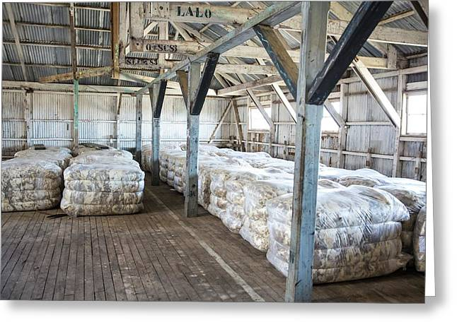 Compacted Sheep Fleeces In Storage Greeting Card by Peter J. Raymond
