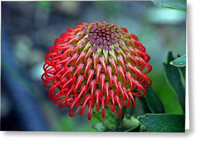 Complexities Of The Fynbos Greeting Card by Chris Whittle