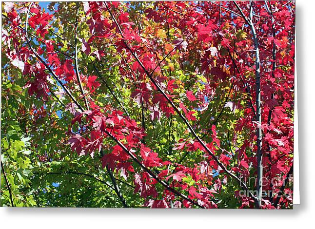 Greeting Card featuring the photograph Complimentary Colors by Debbie Hart