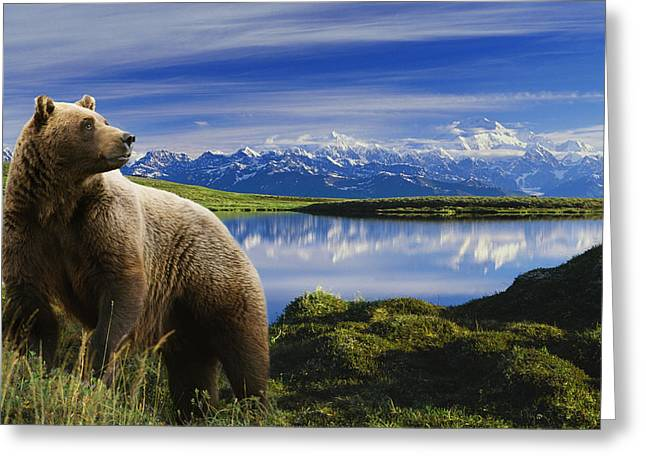 Composite Grizzly Stands In Front Of Greeting Card