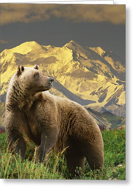 Composite Grizzly Stands On Tundra With Greeting Card by Michael Jones