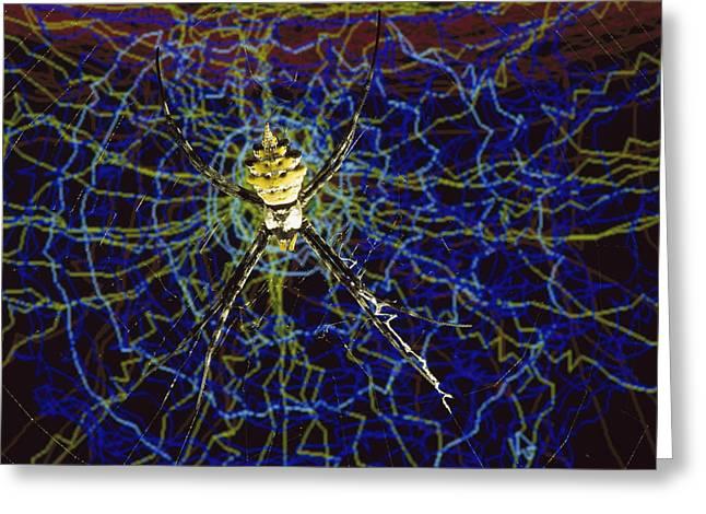Computer Simulation Of A Spider Greeting Card by Heidi & Hans-Juergen Koch