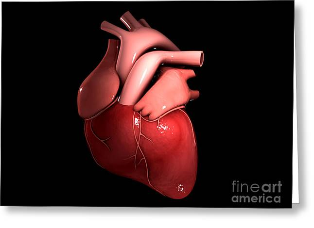 Conceptual Image Of Human Heart Greeting Card
