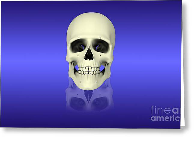Conceptual View Of Human Skull Greeting Card by Stocktrek Images