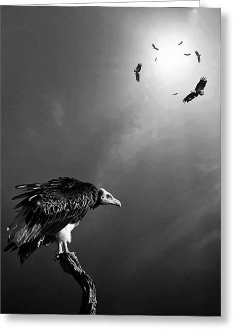 Conceptual - Vultures Awaiting Greeting Card