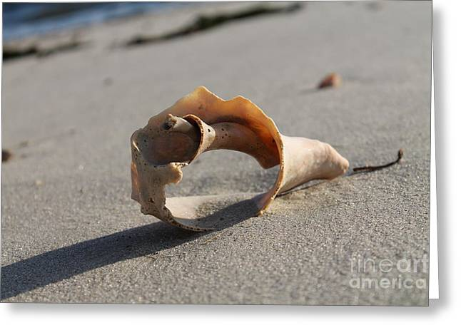 Conch On The Beach Greeting Card by John Doble