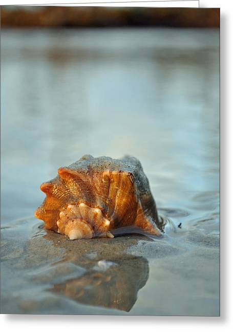 Conch Shell And Reflection On Jekyll Island's Beach Greeting Card