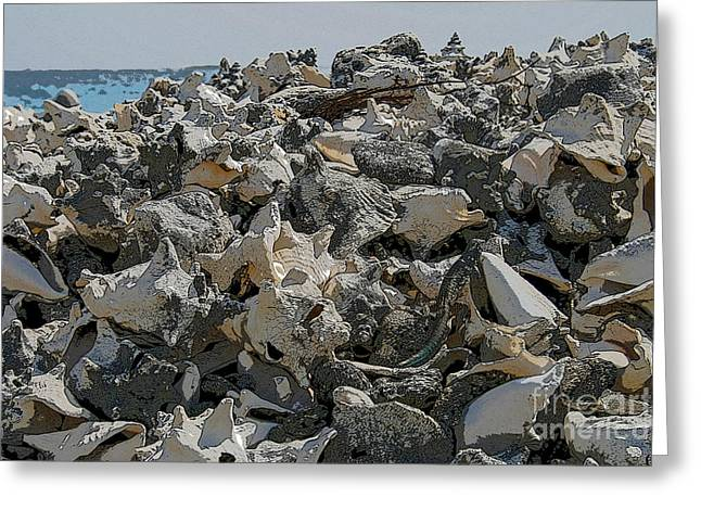 Conch Shells Greeting Card by Patricia Hofmeester