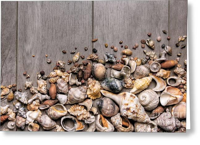 Conchs And Shells Greeting Card by Carlos Caetano
