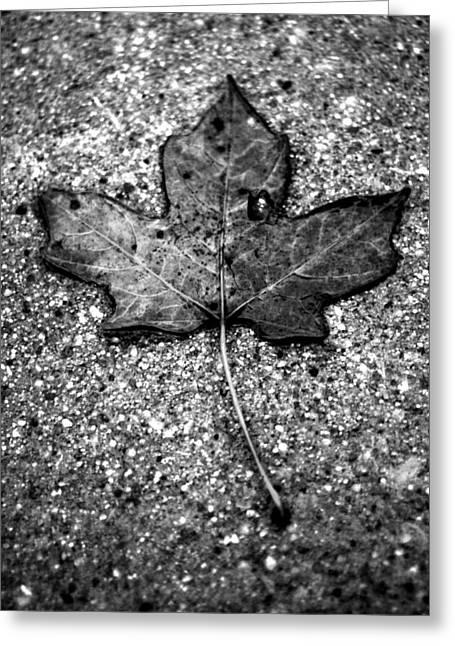 Concrete Leaf Greeting Card