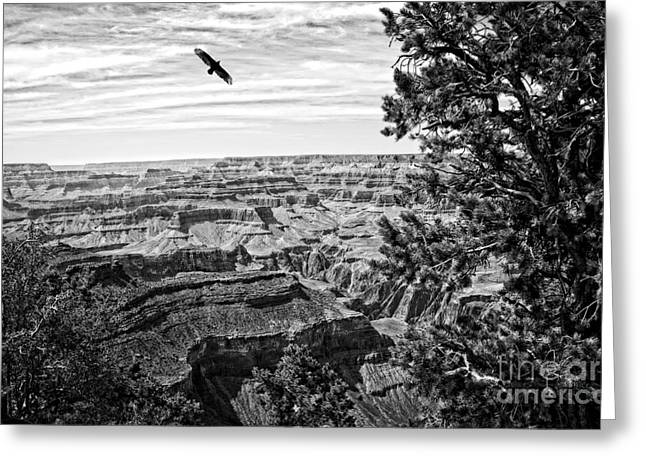 Condor Over The Grand Canyon In Black And White Greeting Card by Lee Craig