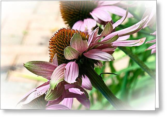 Cone Flower 6 Greeting Card