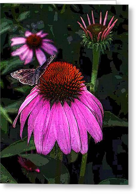 Cone Flower And Butterfly Greeting Card