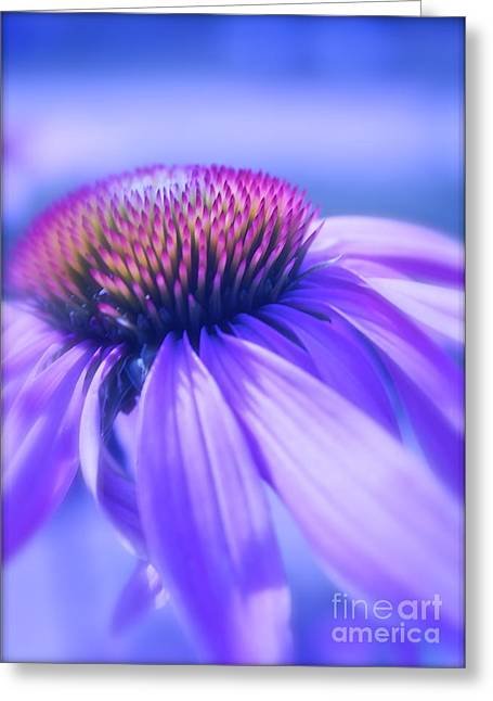 Cone Flower In Pastels  Greeting Card