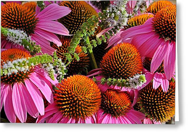 Cone Flowers And Mint Greeting Card