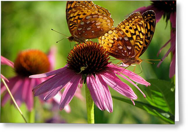 Coneflower Butterflies Greeting Card by David T Wilkinson