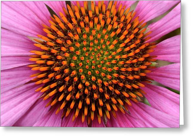 Coneflower Centre Abstract Greeting Card by Nigel Downer