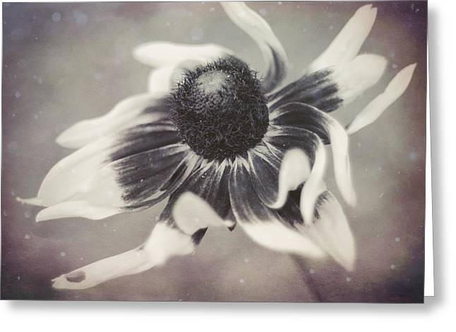Coneflower In Monochrome Greeting Card