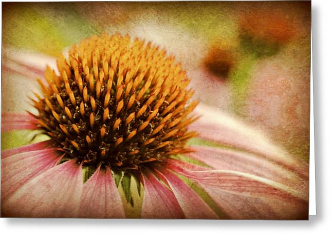 Coneflower Greeting Card by Kelly Nowak