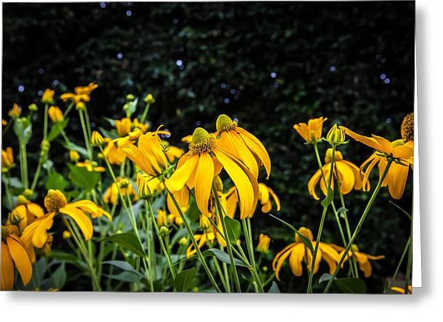 Coneflowers Echinacea Yellow Painted Greeting Card by Rich Franco
