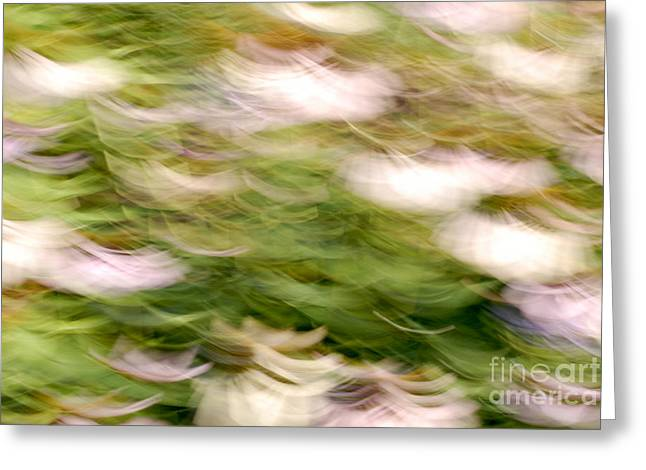 Coneflowers In The Breeze Greeting Card by Paul W Faust -  Impressions of Light