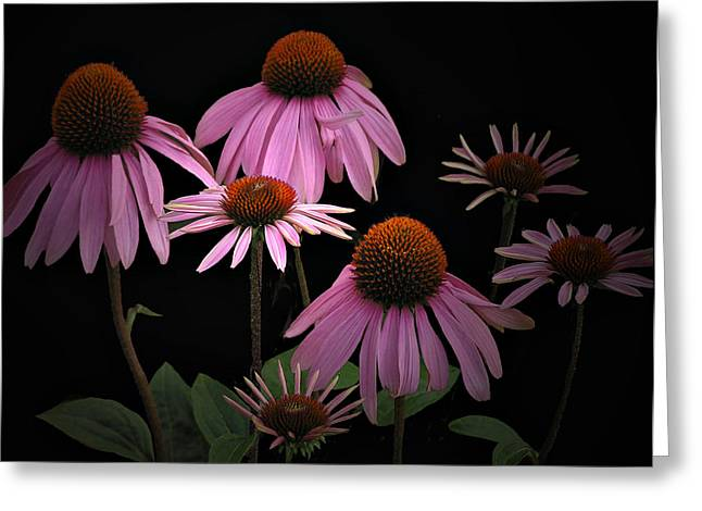 Coneflowers Greeting Card by Judy  Johnson