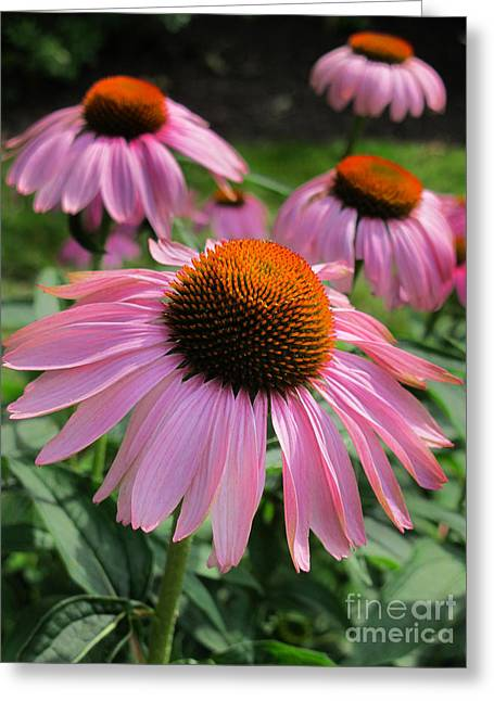 Conehead Daisy Greeting Card