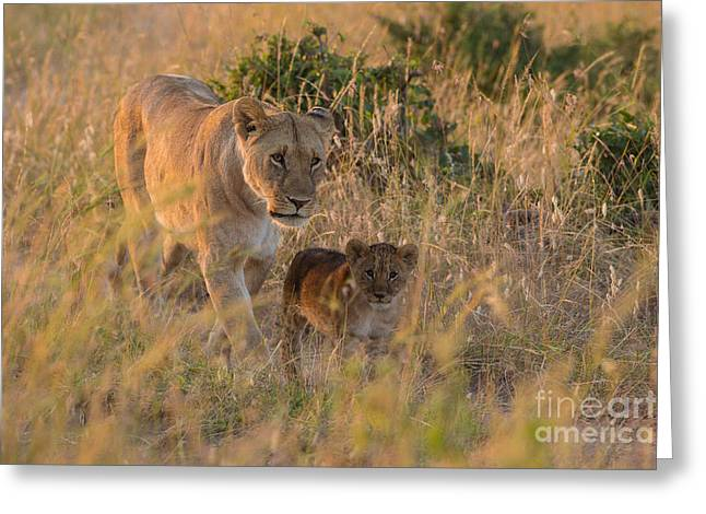 Confidence And Comfort Greeting Card by Ashley Vincent