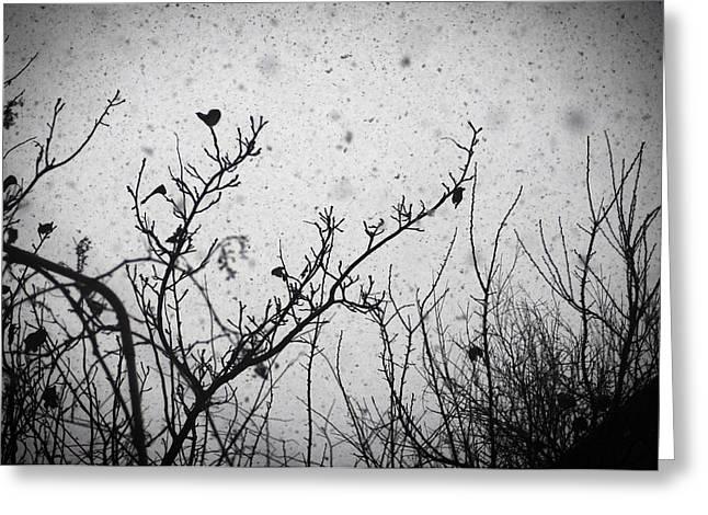 Confusing In The Snow Greeting Card by Taylan Apukovska