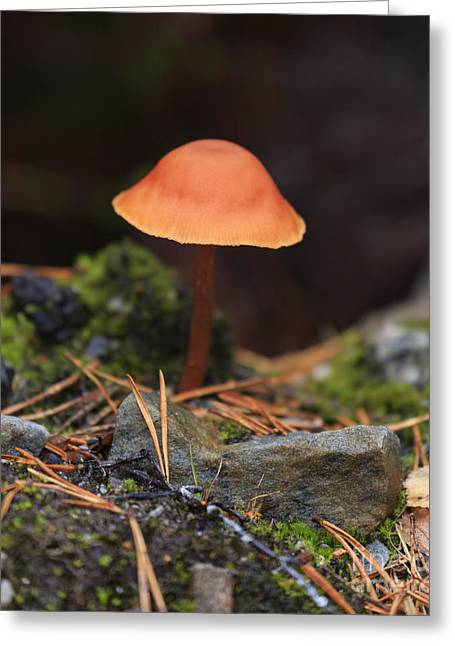 Conical Wax Cap Mushroom Greeting Card by Louise Heusinkveld