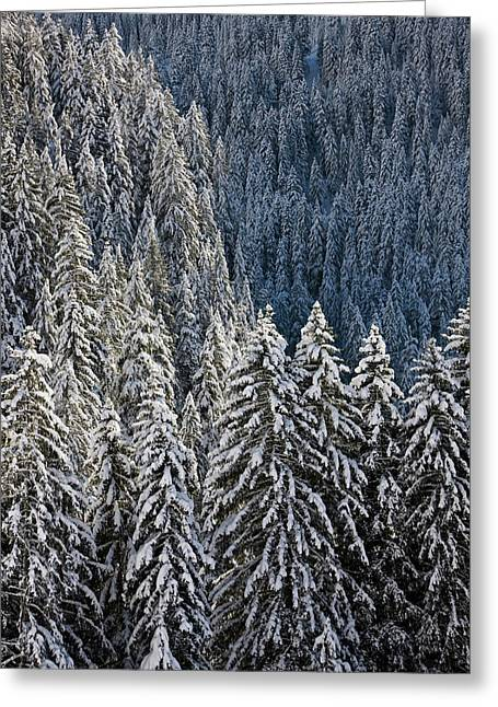 Conifer Forest In Fresh Snow In Kiental Greeting Card by Martin Zwick