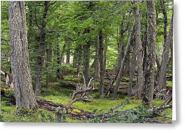 Conifer Forest In The Martial Mountains Greeting Card