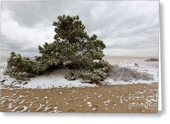 Conifer On A Snowy Cape Cod Beach Greeting Card by Michelle Wiarda