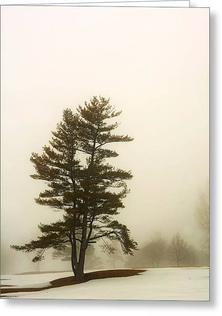 Coniferous Tree In Winter Greeting Card