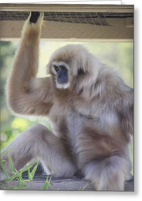 Contemplating Gibbon Greeting Card