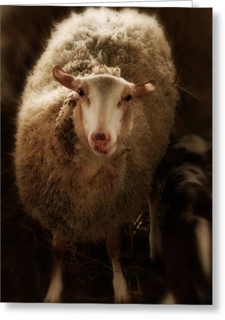 Contemporary Sheep Iv Greeting Card by Doc Braham