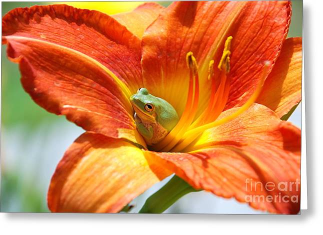 Content Greeting Card by Kathy Gibbons