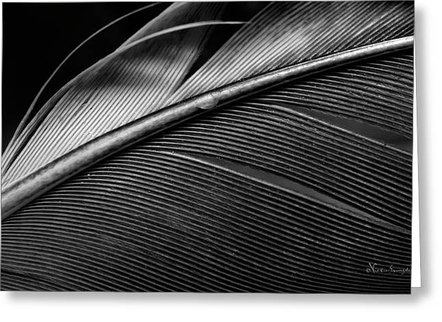Contour Feather Greeting Card