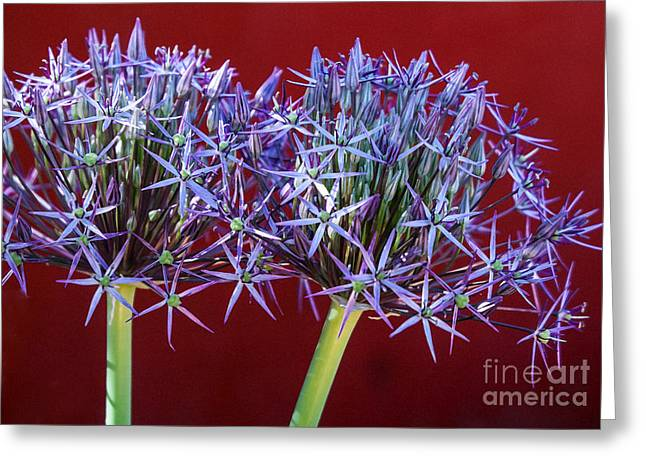 Flowering Onions Greeting Card