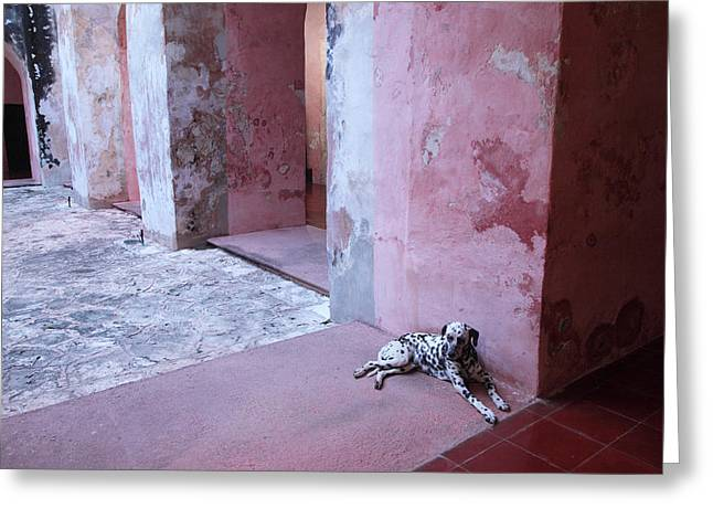 Convent Dog Greeting Card