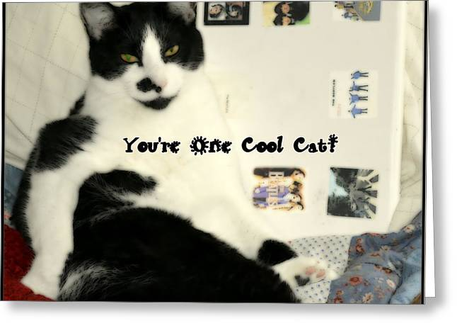Cool Cat Greeting Card Greeting Card by Kathy Barney