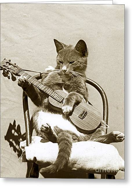 Greeting Card featuring the photograph Cool Cat Playing A Guitar Circa 1900 Historical Photo By Photo  Henry King Nourse by California Views Mr Pat Hathaway Archives
