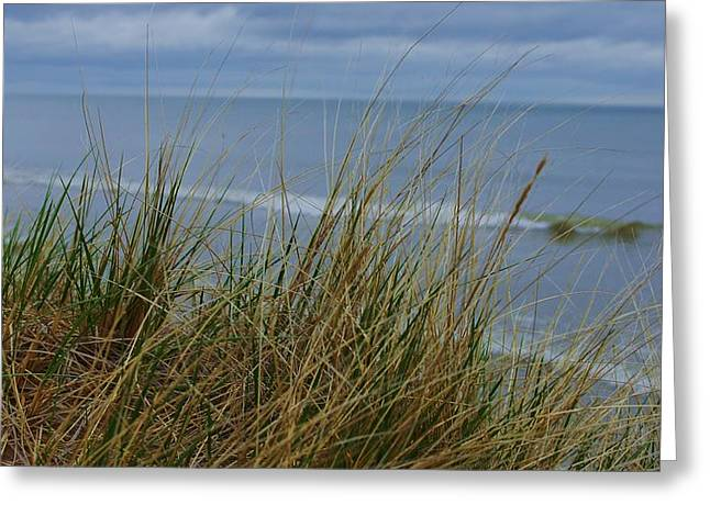 Cool Day At The Beach Greeting Card by Rosemarie E Seppala