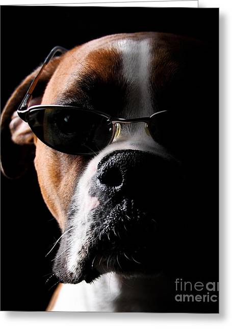 Cool Dog Greeting Card by Jt PhotoDesign